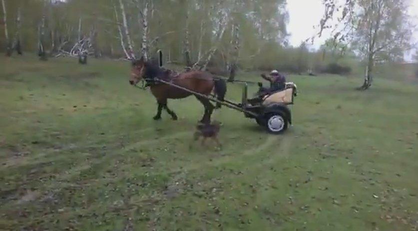 Экстримальный дрифт на лошади