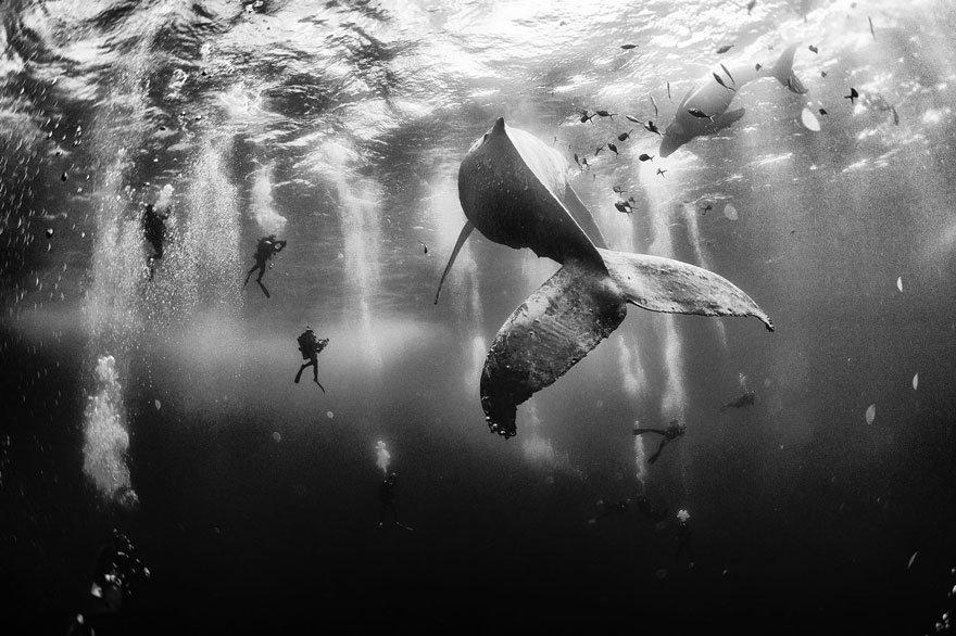 Красота и величественность китов