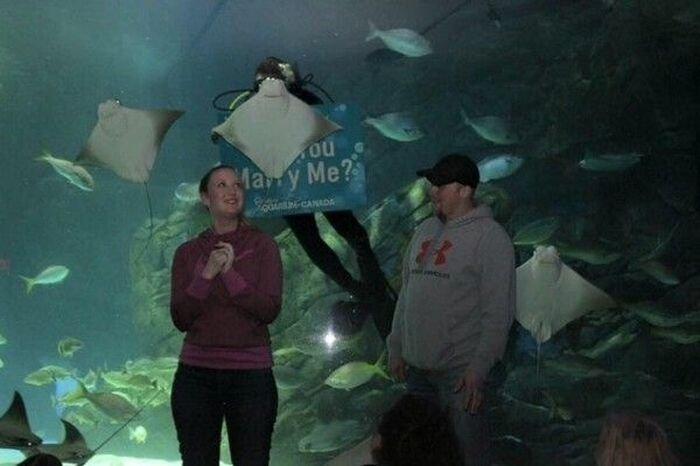 В океанариуме скат попытался сорвать помолвку (3 фото)