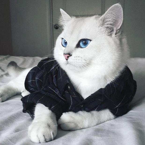 Кот с самыми красивыми глазами (17 фото)
