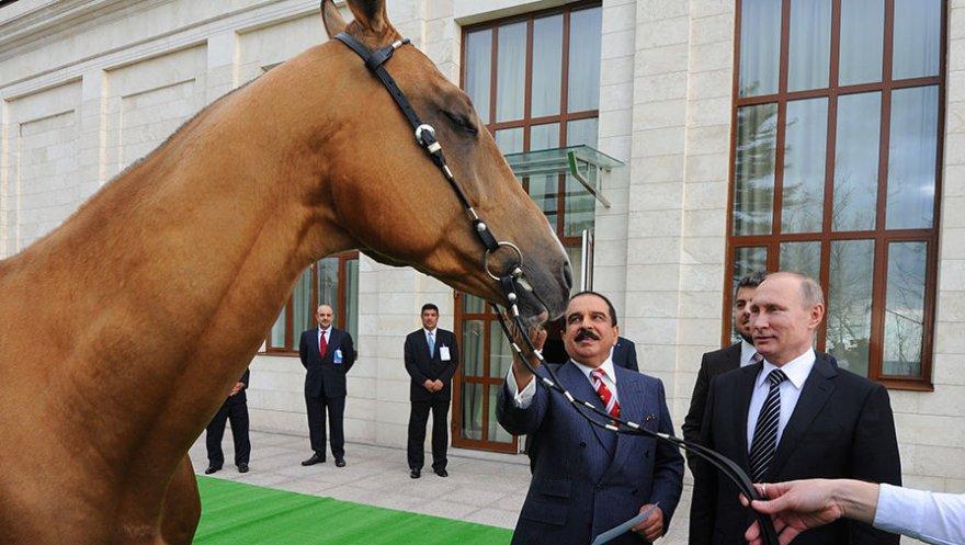 Жеребец для короля Бахрейна стоимостью как «два роллс-ройса»