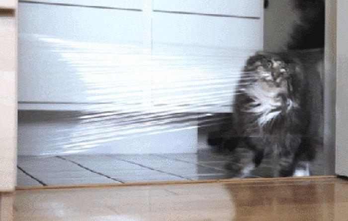 Игры домашних животных, которые неудались (17 гифок)