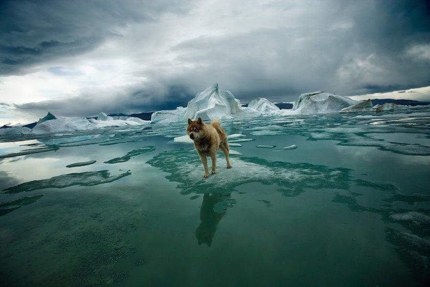 Потрясающая Арктика: исчезающий Север