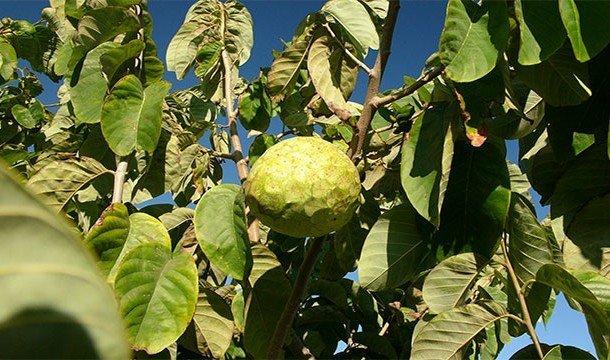 Самые необычные фрукты в мире