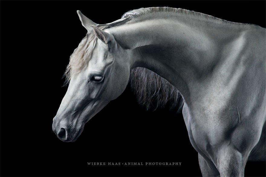 Потрясающие фотографии лошадей