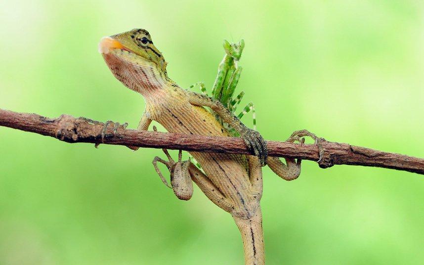 Фотографии животных прошедшей недели