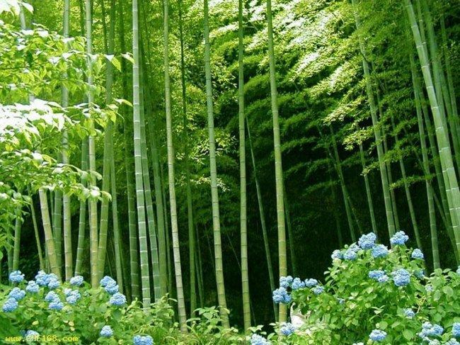Факты о семенах растений