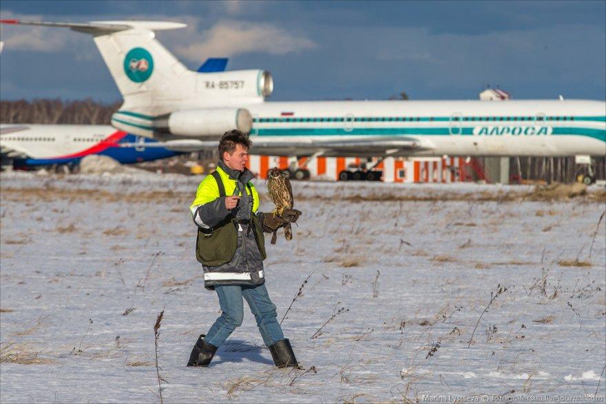 Орнитологическая служба в Домодедово