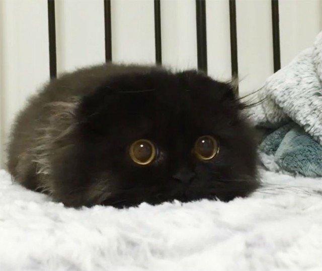 Удивленный кот по кличке Гимо (15 фото)