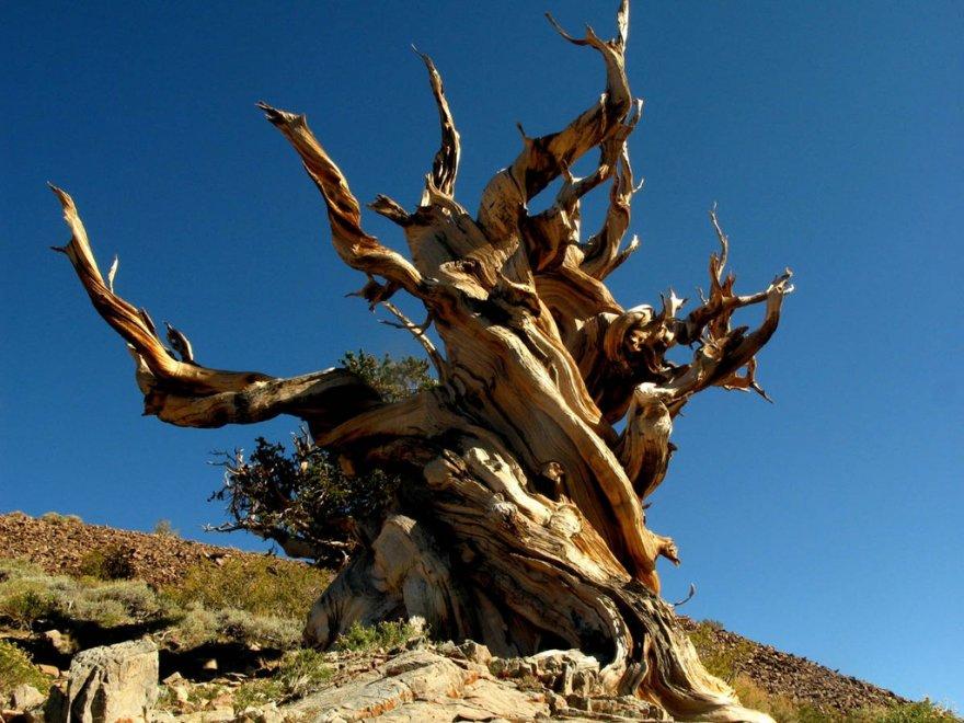 Несколько удивительных организмов, которые живут невероятно долго