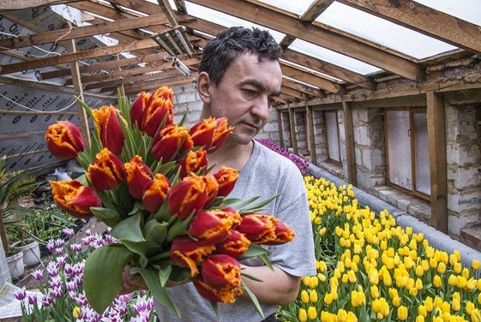 8000 тюльпанов на крыше своего дома вырастил предприниматель из Белгородской области (8 фото)