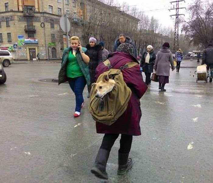 Забавные фото, которые возможно было сделать только в России (41 фото)