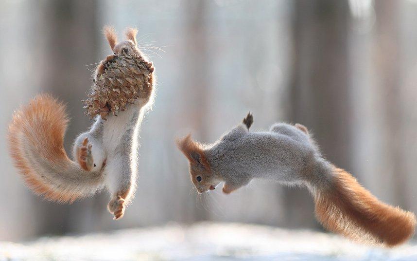 Потрясающие фотографии животных прошедшей недели