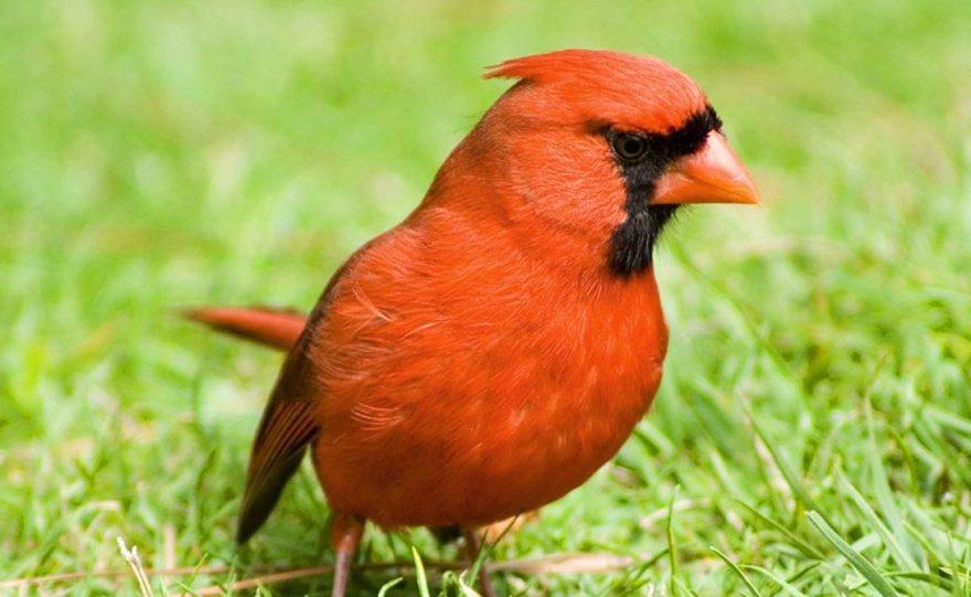 Cамые опасные птицы на свете