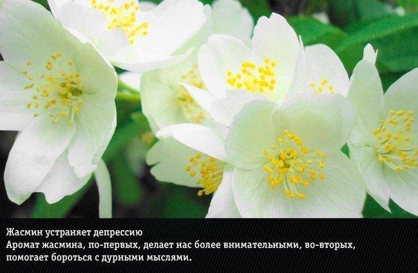 Природные ароматы, неожиданно меняющие эмоции человека.