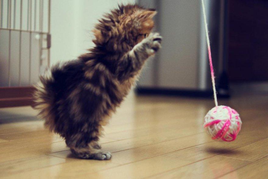 Как коты демонстрируют вам свою любовь