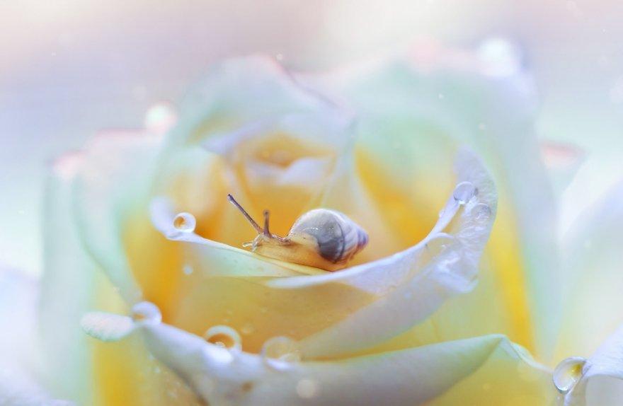 Удивительные макро фотографии Пейлинг Ли