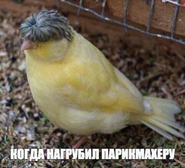 Подборка прикольных картинок (71 фото)