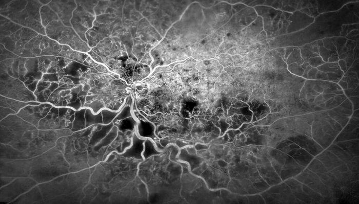 Удивительные фотофакты из мира науки (20 фото)