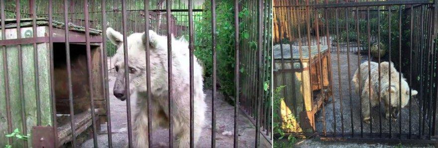 Медведица 30 лет ждала спасения