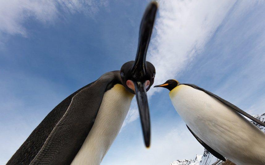 Подборка лучших фотографий животных прошедшей недели
