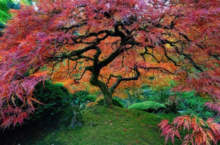 17 самых потрясающих деревьев в этом мире