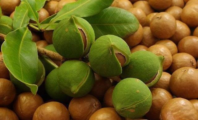 Самые дорогие орехи в мире – макадамия