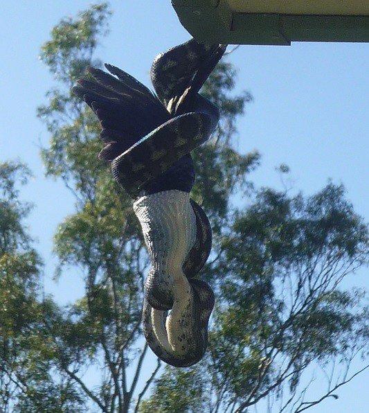 А в это время в Австралии... (23 фото)