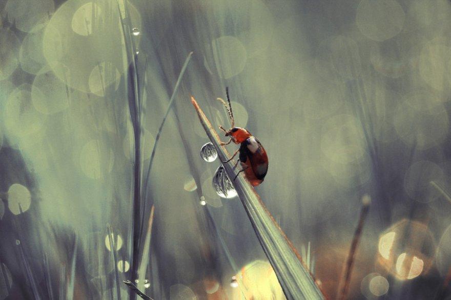 Удивительные макро насекомые Динса Сильвера