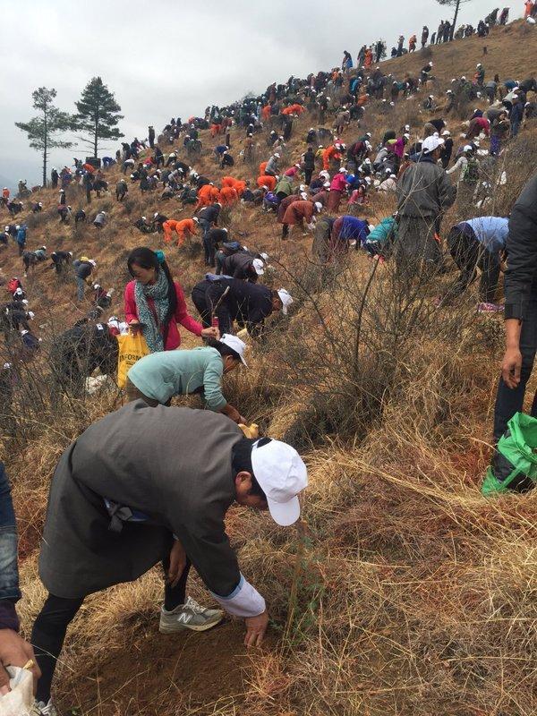 108 тысяч деревьев высадили в честь рождения принца в королевстве Бутан