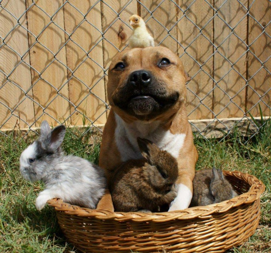 Самый дружелюбный щенок Бум