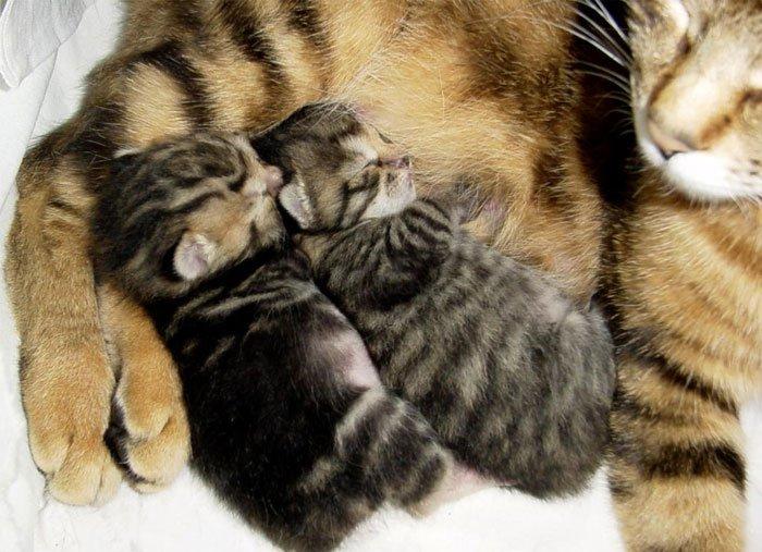 Знаете ли вы, почему кошка иногда топчет вас лапками?