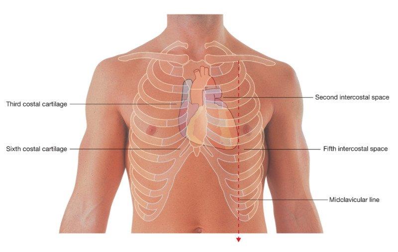 Несколько удивительных фактов о сердце