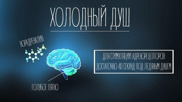 Практическая нейробиология