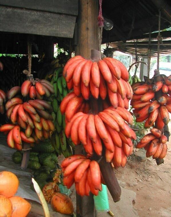 Низкокалорийные красные бананы