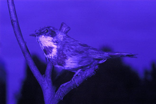 Особенности цветового зрения у животных