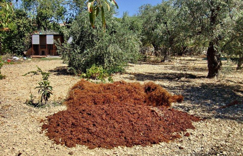 Как на Кипре делают джукджук