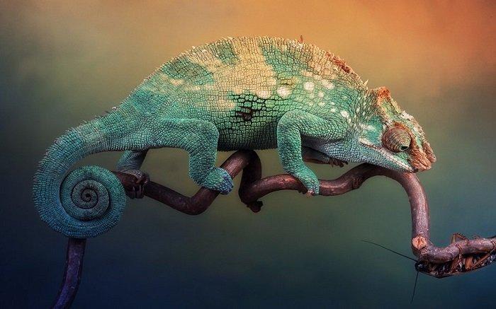 Интересно и познавательно о хамелеонах