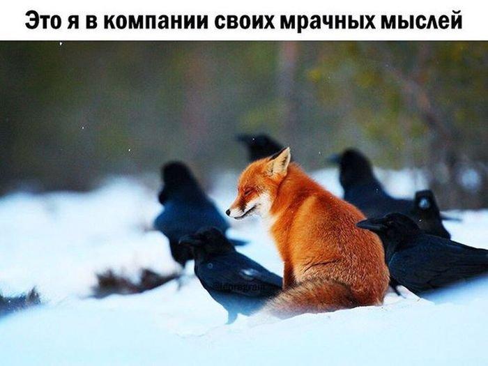 Подборка прикольных картинок (53 фото)