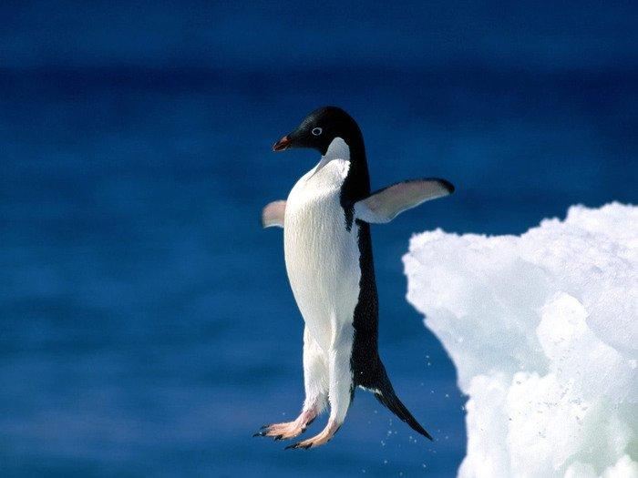 Любопытные факты о пингвинах