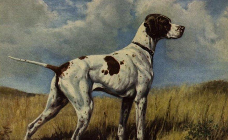 Исчезнувшие собачьи породы