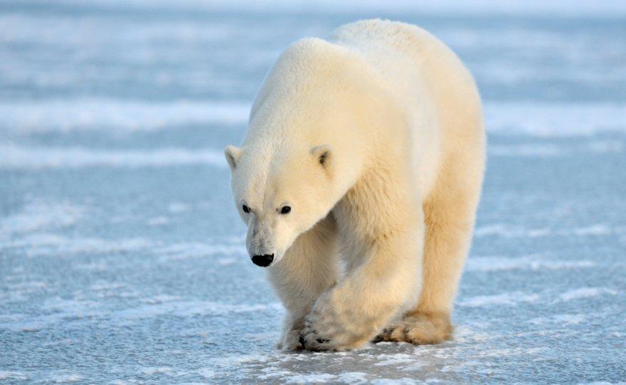 Список самых опасных животных планеты