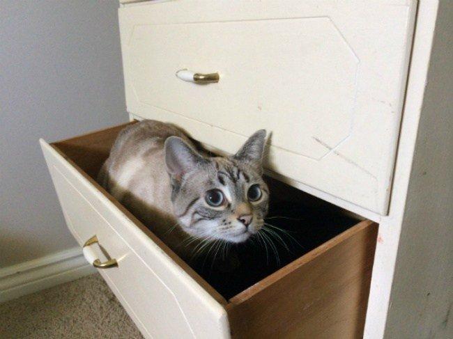 Если вы потеряли кота, поищите здесь...