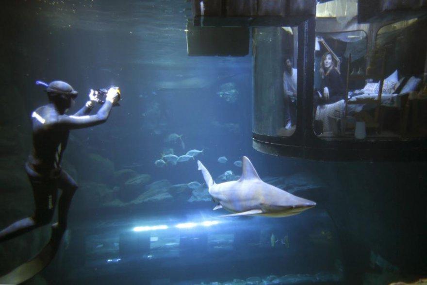 Первая подводная спальня, в которой гости могут спать рядом с акулами