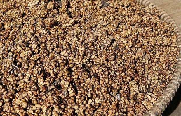 Cамый необычный кофе в мире