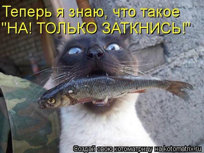 Лучшие «пушистые» шутки (50 фото)