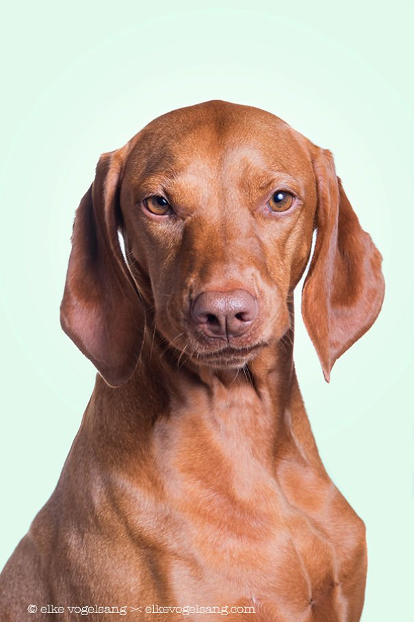 Необычайно выразительные собачьи морды