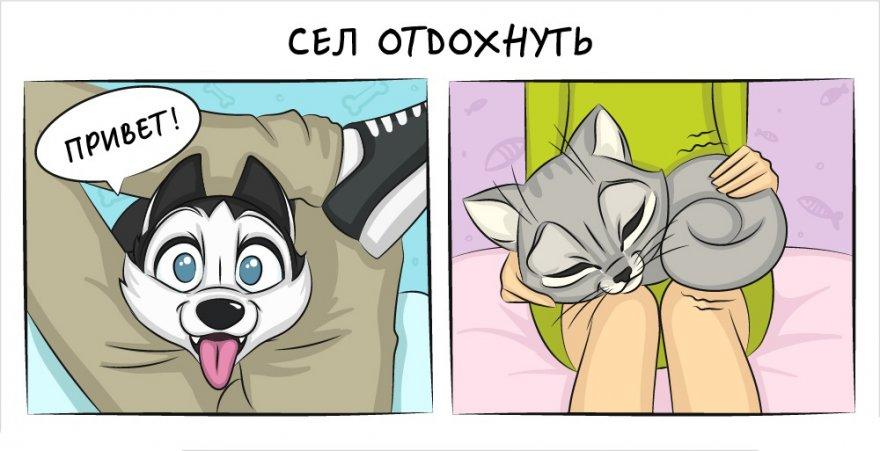 Комиксы, о том как отличается жизнь с кошкой и жизнь с собакой