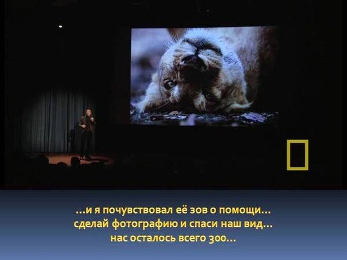 Захватывающая история одного снимка дикой природы (15 фото)