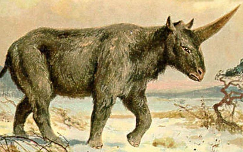 Самый последний сибирский единорог